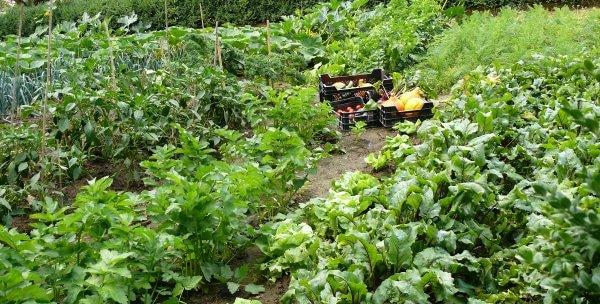 Voordelen van een biotuin!