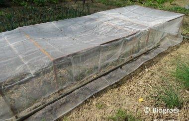 Winterprei planten en wespen verjagen