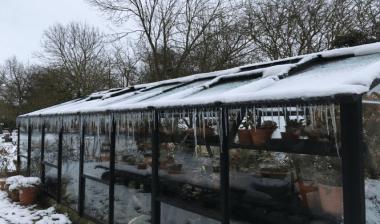Aandachtspunten bij het laten overwinteren van terrasplanten