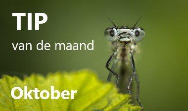 Eenvoudige tips voor natuurlijke bestrijding - Oktober 2019