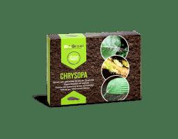 Gaasvlieglarven tegen bladluis: Chrysopa