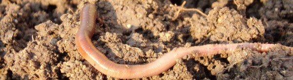 De rol van een levende bodem