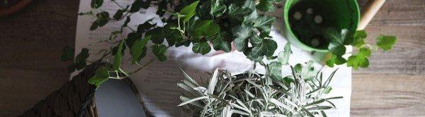 Zelf kamerplanten vermeerderen