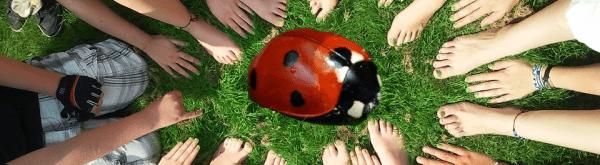 Beschermmechanismen van lieveheersbeestjes
