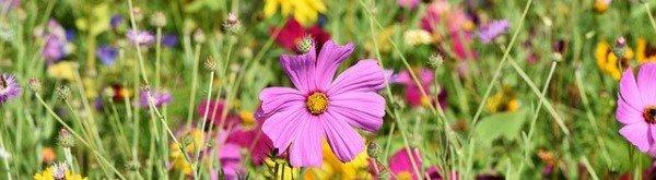 Bloemenweide aanleggen en onderhouden