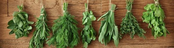 Kruiden oogsten en bewaren