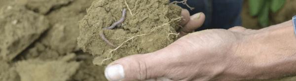 Waarom hebben we een levende bodem nodig?