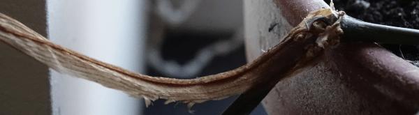 Rouwvliegjes: larven van varenrouwmug bestrijden