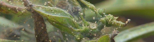 Spint: herkennen en bestrijden