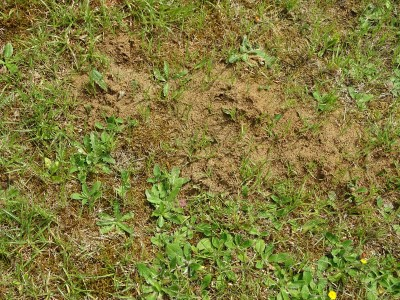 schade mieren gazon