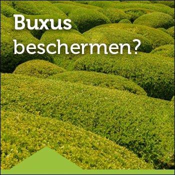 Buxushaag beschermen