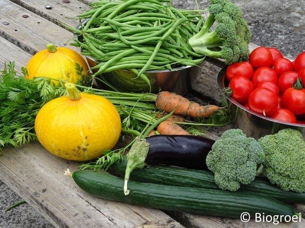 Biogroei tuin eind juli for Groenten tuin