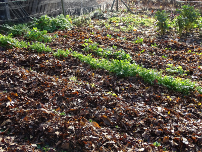 bladeren verzamelen met grasmachine om te mulchen
