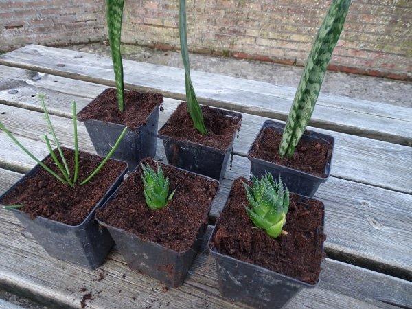stekken van kamerplanten