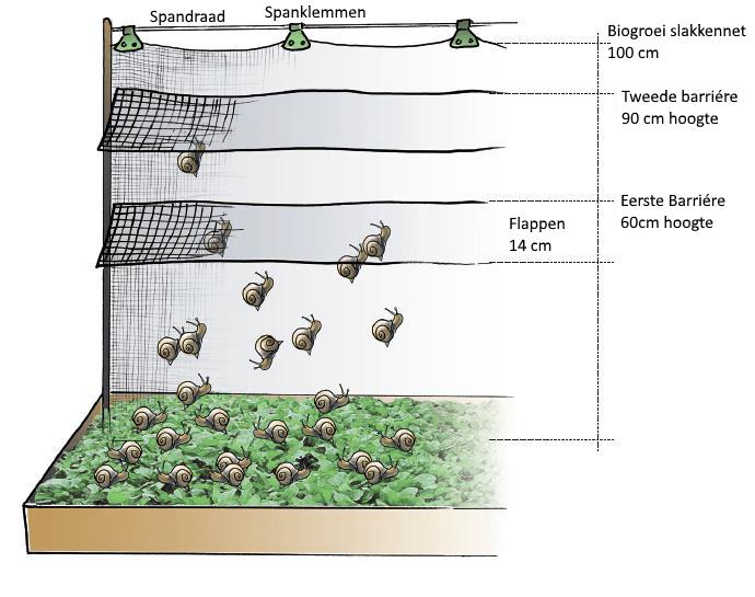 slakkennet slakken barriére
