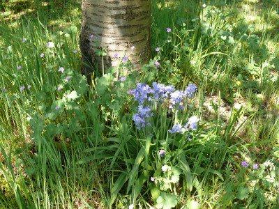 biodivers verwilderd hoekje in de biogroei tuin