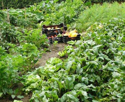 Biodiverse biogroei tuin