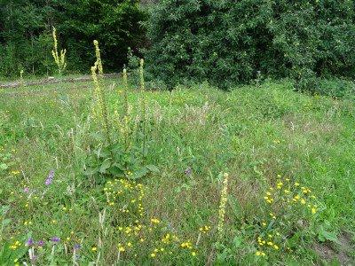 biodiversiteit landschap biogroei